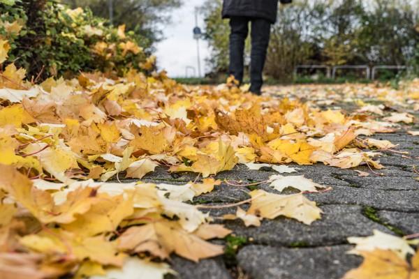 Herbstlaub, belbe Bltter im Herbst auf dem Fuweg,